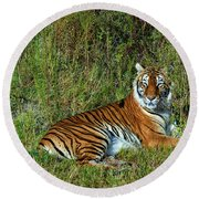 Tiger In The Grass Round Beach Towel