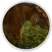 Tiger In The Midst Of Buttercups Round Beach Towel