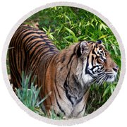Tiger In The Vast Jungles Round Beach Towel