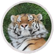 Tiger Nap Time Round Beach Towel