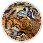 Tiger Peepers Round Beach Towel
