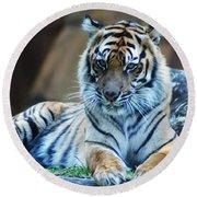 Tiger Posing Round Beach Towel