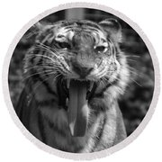 Tiger Say Aw Round Beach Towel