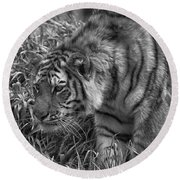 Tiger Stalking In Black And White Round Beach Towel