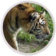 Tiger Stalking Round Beach Towel
