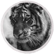 Tiger Stare In Black And White Round Beach Towel