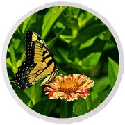 Tiger Swallowtail And Peppermint Stick Zinnias Round Beach Towel