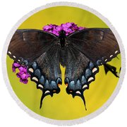Tiger Swallowtail Butterfly, Dark Phase Round Beach Towel