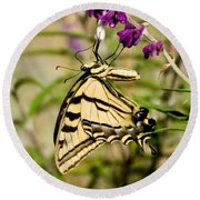 Tiger Swallowtail Butterfly Feeding Round Beach Towel