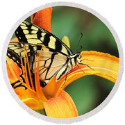 Tiger Swallowtail Butterfly On Daylily Round Beach Towel