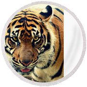 Tiger Tongue Two Round Beach Towel