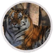 Tiger Round Beach Towel