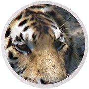 Tiger Water Round Beach Towel