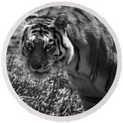 Tiger With A Cold Stare Round Beach Towel