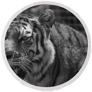 Tiger With A Hard Stare Round Beach Towel