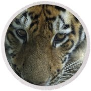 Tiger You Looking At Me Round Beach Towel
