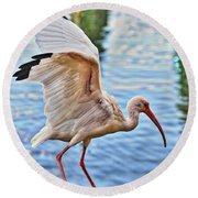 Tightrope Walking Ibis Round Beach Towel