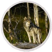 Timber Ghost Wolf Round Beach Towel