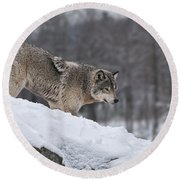 Timber Wolf On Hill Round Beach Towel