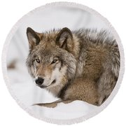 Timber Wolf Pictures 1028 Round Beach Towel