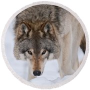 Timber Wolf Pictures 1042 Round Beach Towel