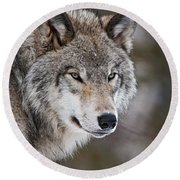 Timber Wolf Pictures 1067 Round Beach Towel