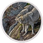 Timber Wolf Pictures 1094 Round Beach Towel