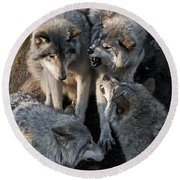 Timber Wolf Pictures 1096 Round Beach Towel