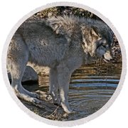Timber Wolf Pictures 1101 Round Beach Towel