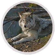 Timber Wolf Pictures 1148 Round Beach Towel