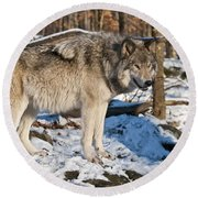 Timber Wolf Pictures 1175 Round Beach Towel