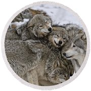 Timber Wolf Pictures 120 Round Beach Towel