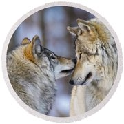 Timber Wolf Pictures 1230 Round Beach Towel