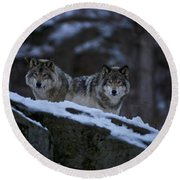 Timber Wolf Pictures 1233 Round Beach Towel