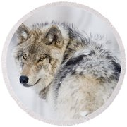Timber Wolf Pictures 1268 Round Beach Towel