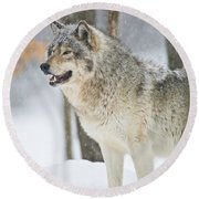 Timber Wolf Pictures 1302 Round Beach Towel