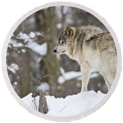 Timber Wolf Pictures 1306 Round Beach Towel