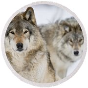 Timber Wolf Pictures 1312 Round Beach Towel