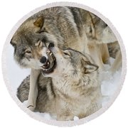 Timber Wolf Pictures 1314 Round Beach Towel
