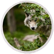 Timber Wolf Pictures 1328 Round Beach Towel