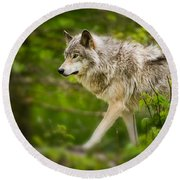 Timber Wolf Pictures 1329 Round Beach Towel