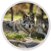 Timber Wolf Pictures 1363 Round Beach Towel