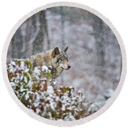 Timber Wolf Pictures 1395 Round Beach Towel