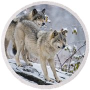 Timber Wolf Pictures 1417 Round Beach Towel