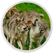 Timber Wolf Pictures 1593 Round Beach Towel