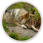 Timber Wolf Pictures 1646 Round Beach Towel