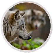 Timber Wolf Pictures 1693 Round Beach Towel