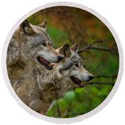 Timber Wolf Pictures 1710 Round Beach Towel