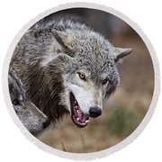 Timber Wolf Pictures 173 Round Beach Towel