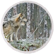 Timber Wolf Pictures 184 Round Beach Towel